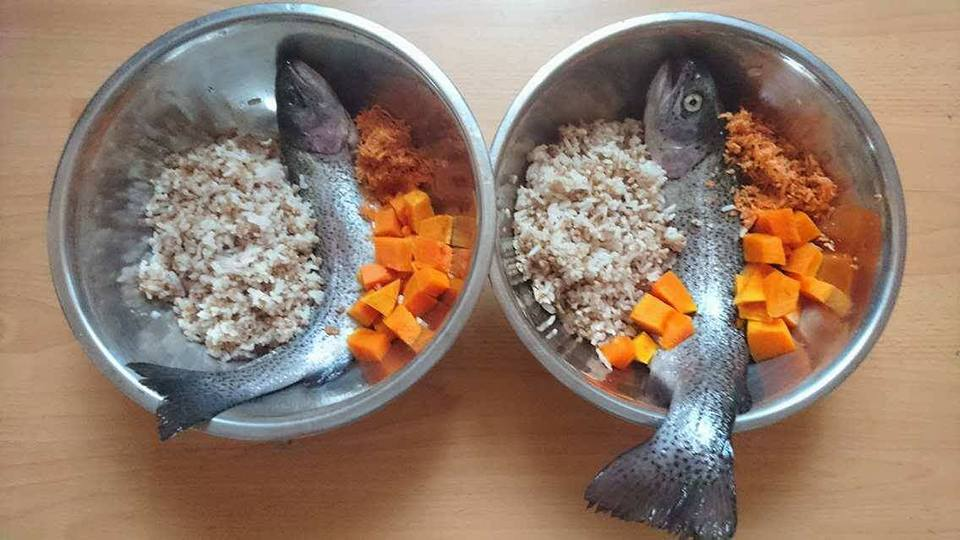 Picture of raw dog food for Dobermans with fish